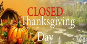 5be335afefd0f0383b1826cf_Thanksgiving day